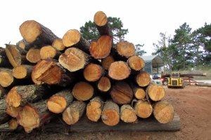 Cut trees 5