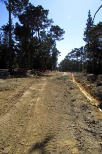 Clear cutting for estate lot access road in Area F